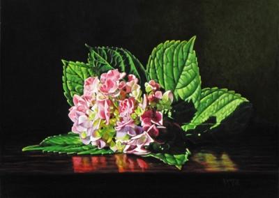 Hydrangea Blossom in Sunlight - SOLD