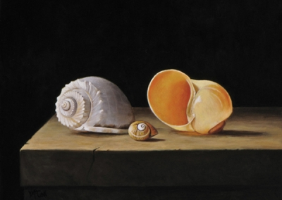 Three Shells on Stone Table