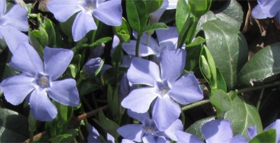The Periwinkle Finish Line
